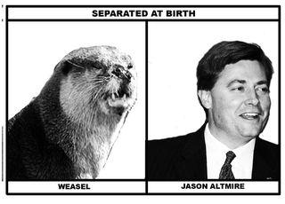 Weasel-alt
